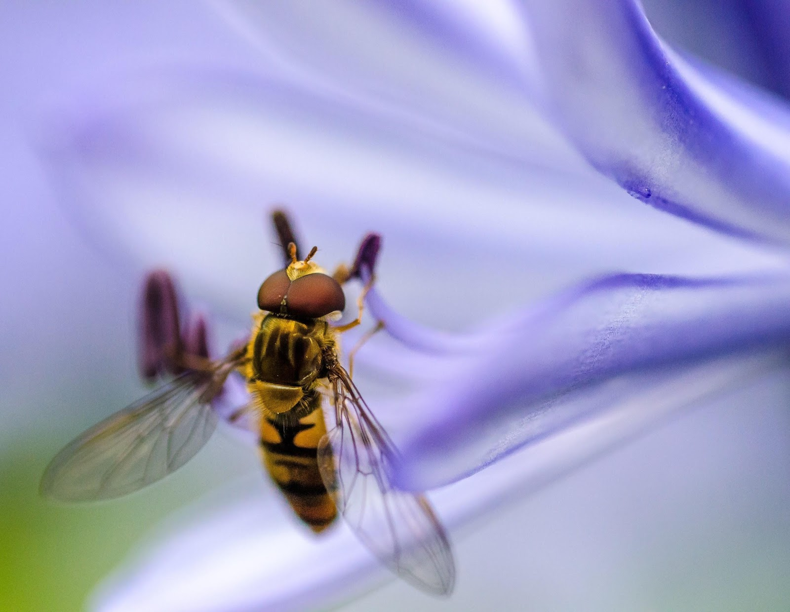 Bees are foundational to sustainable life on earth